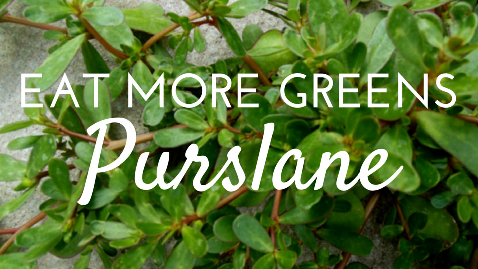 Eat Your Leafy Greens: Purslane the Wonder Food